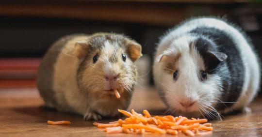 Rätt vård till ditt djur med veterinär